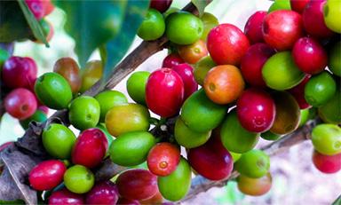 Espresso 意式咖啡